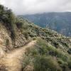 Lower Condor Peak trail restoration area in 2020