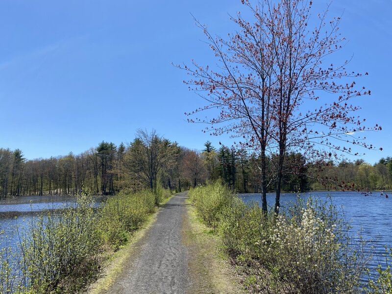 Toward the Eastern end of the trail