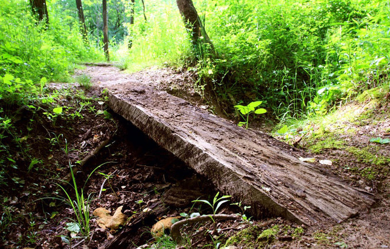 Squeeze Tree Bridge