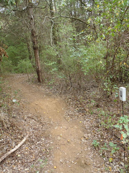 Entrance to Harveys Trail.   This track is tight and includes a great switchback.