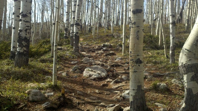 techy section in the aspens