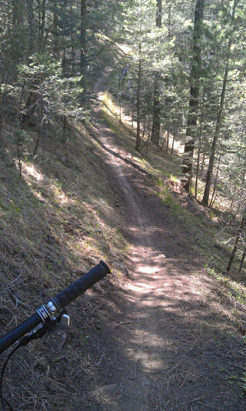 Fun rolling singletrack at the upper end of the Schultz Creek Trail.
