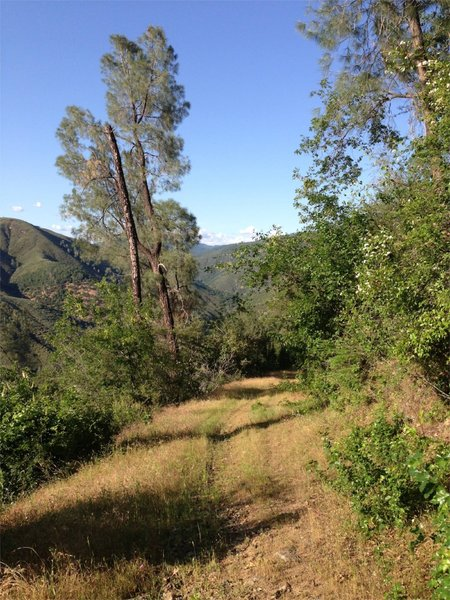 View of doubletrack trail going down into the canyon from buck meadows