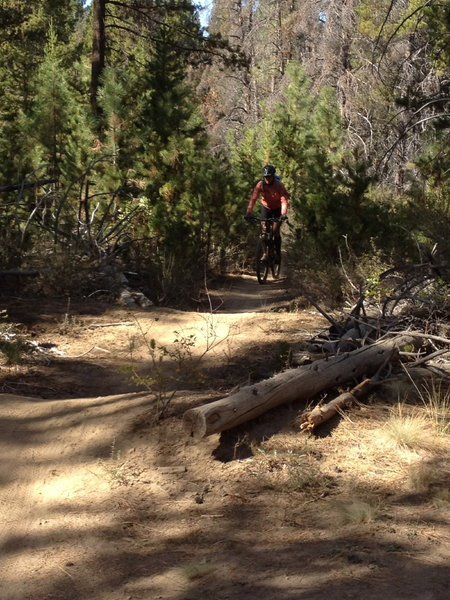 Easy section of trail.