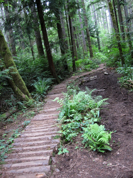 Log section.