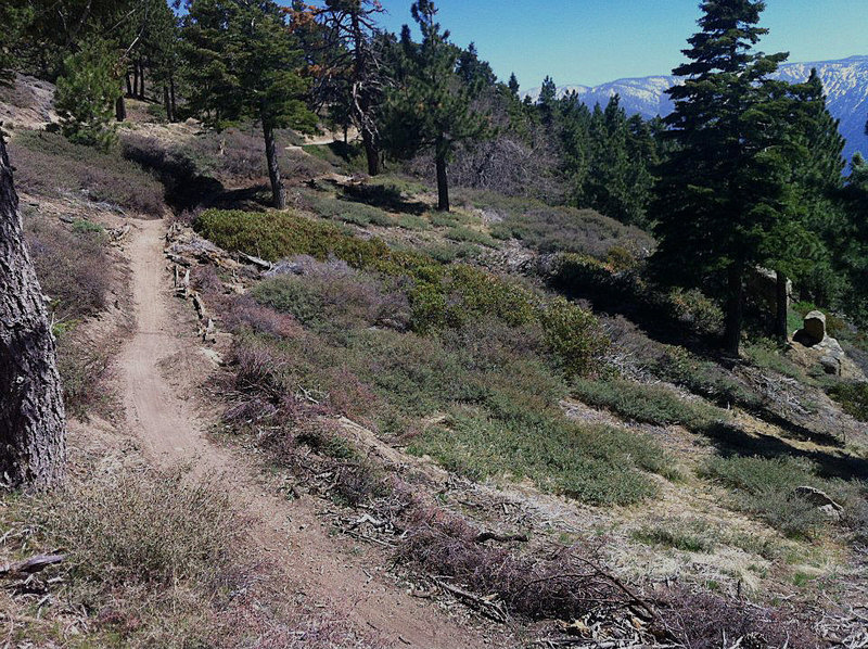 Mountain views and new singletrack on the Skyline Trail.