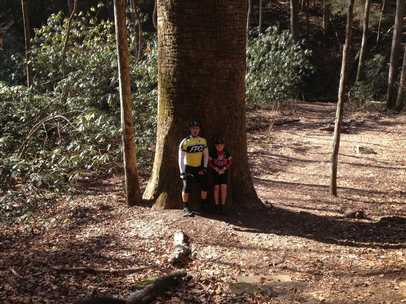 That's one big Tree!