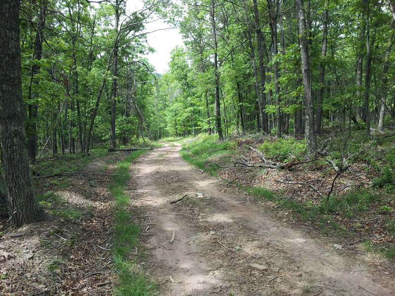 Starts with some mostly level dirt road