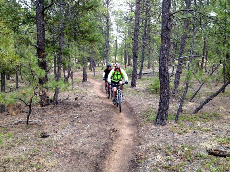 Back into unburned forest for a bit before popping out at the Colorado Trail.