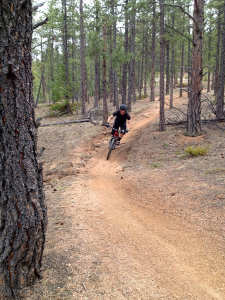 This section of the Colorado Trail is fun as it works its way towards Redskin Creek trail.