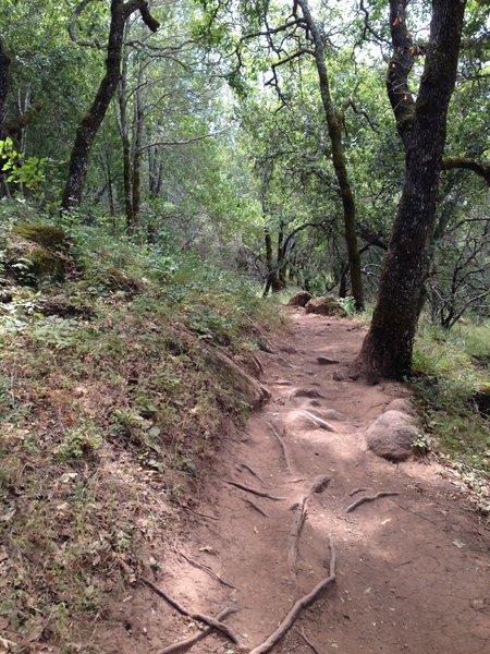 No warm up at Annadel. The climb starts immediately.