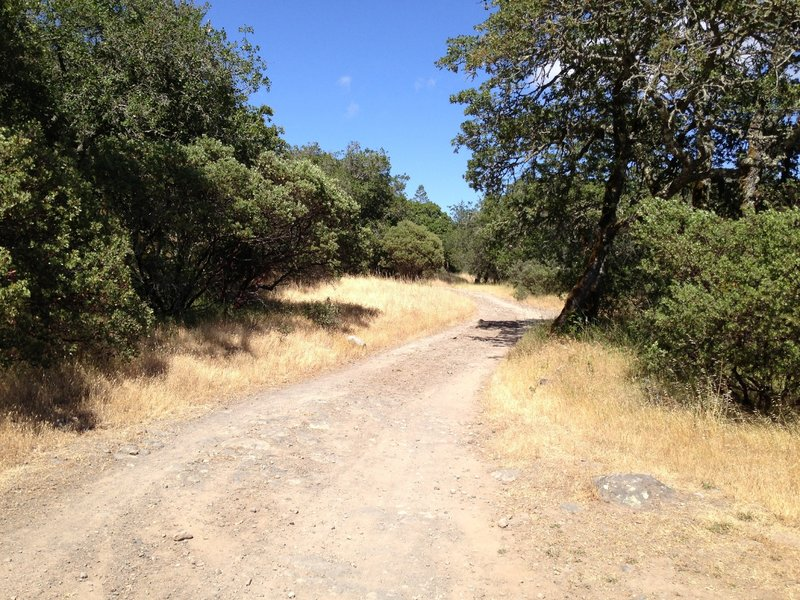 The open fire road at Annadel
