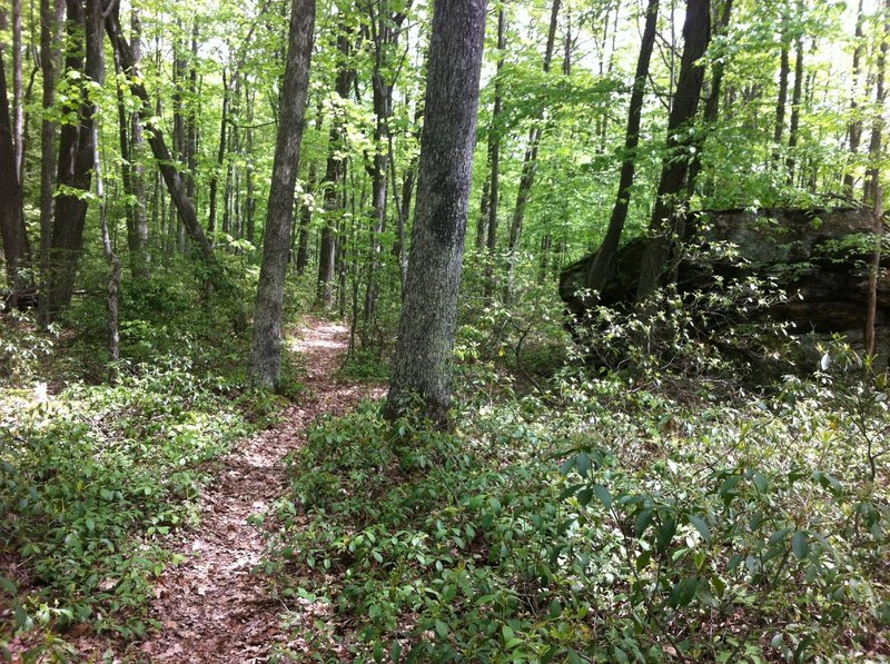 Singletrack on the Tanbark Trail