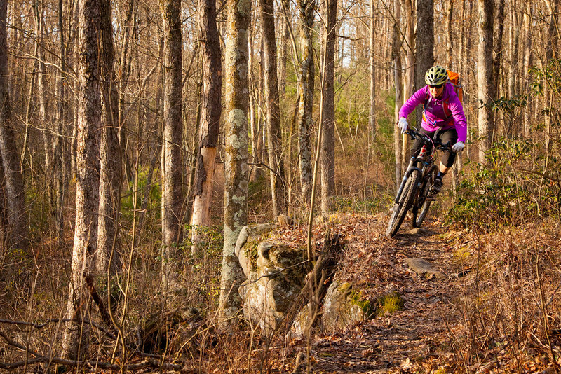 The Doc Smith trail features beautiful sections of hardwoods and rock cliffs.