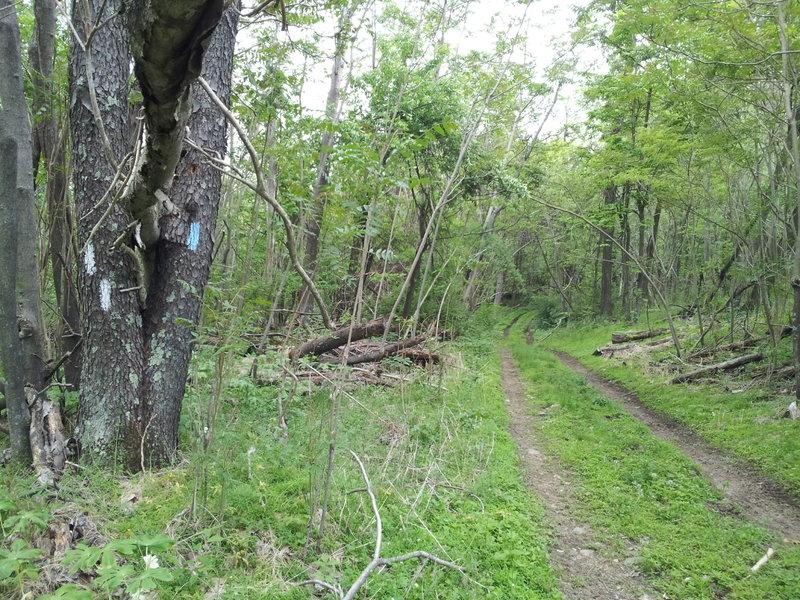 Continuing on Tuscarora trail
