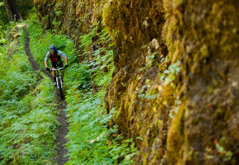 Hanging gardens and rock walls are common on the Dread and Terror section of North Umpqua.