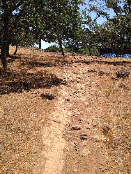 "The start of ""Mini Rock Garden"" Trail"
