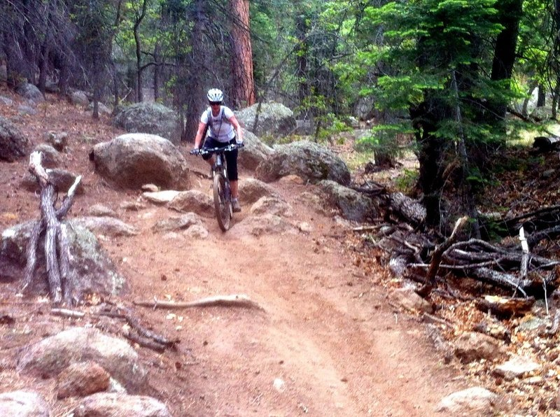 Fun smooth trail with occasional rocks & roots