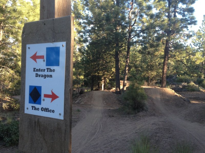 This photo shows the top of the trail where it separates by skill level.  The trails are marked with ski hill-type icons.  Enter The Dragon is a blue square intermediate line the The Office is a black diamond expert line.