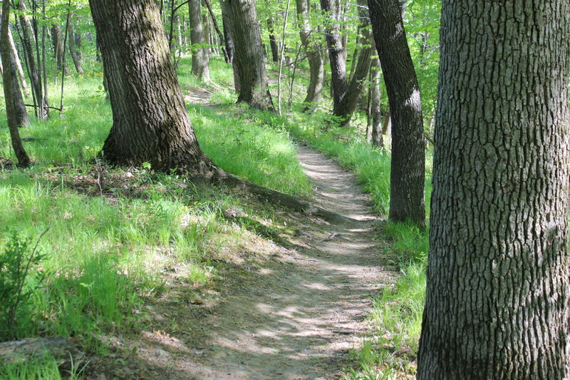 Typical twisty singletrack of this trail system.