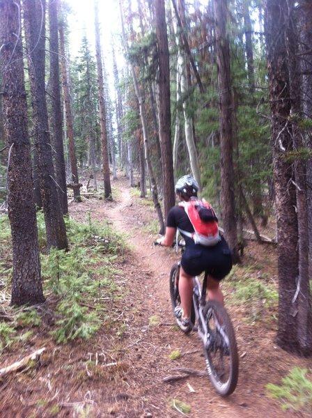 Rider on the Hobbit Trai.