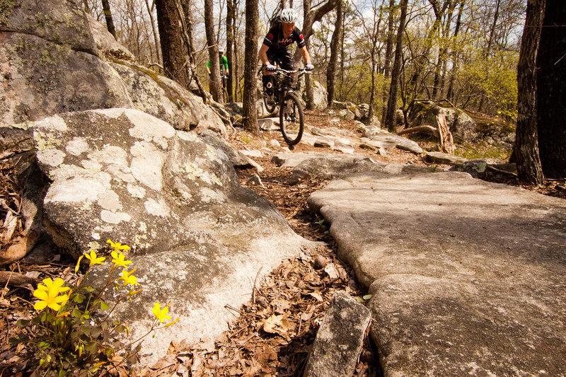 Rocks and wildflowers in abundance on the West Ridge Trail.
