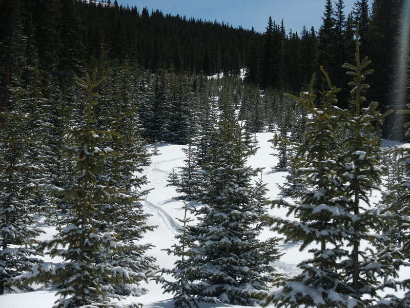 An abundance of young saplings make for some exciting slalom-style tree skiing. It won't be long before these trails are completely grown in.