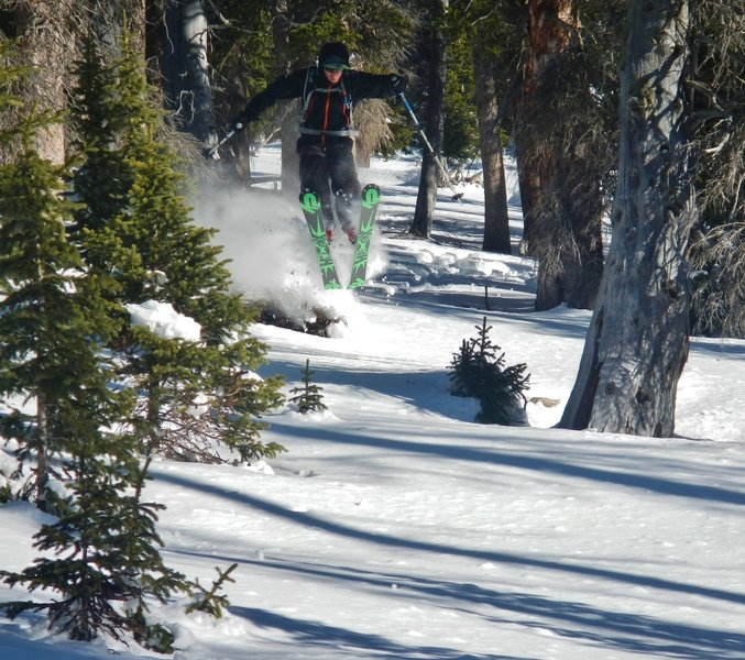 Plenty of fun stumps to jump off of.