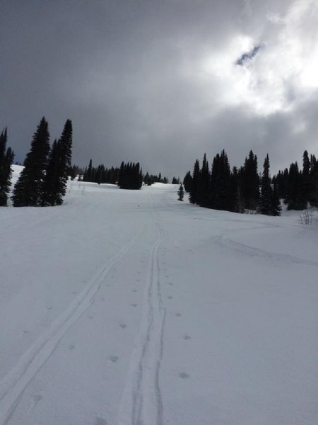Skin track ascending Alpine