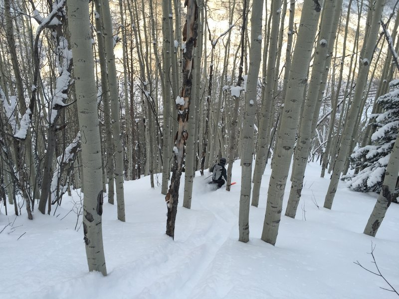 North-facing trees can offer good snow even when the south faces are crusty. This picture shows a typical tree section, though some sections are tighter or more open.