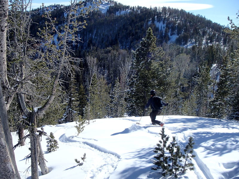 Starting down Burnt Knob. The headwaters area of Red Lodge Mountain is visible in on the slope in front of the skier.