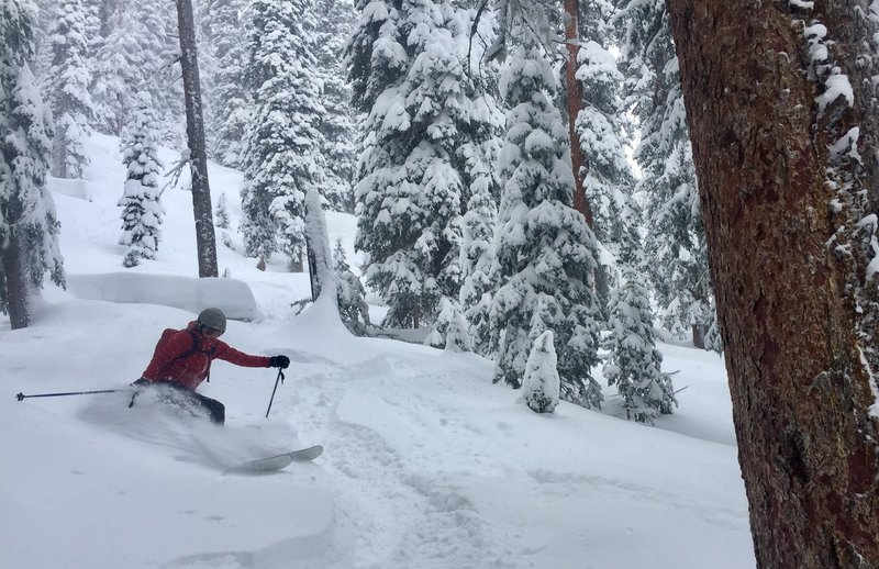 Allie tearing up the Christmas pow!