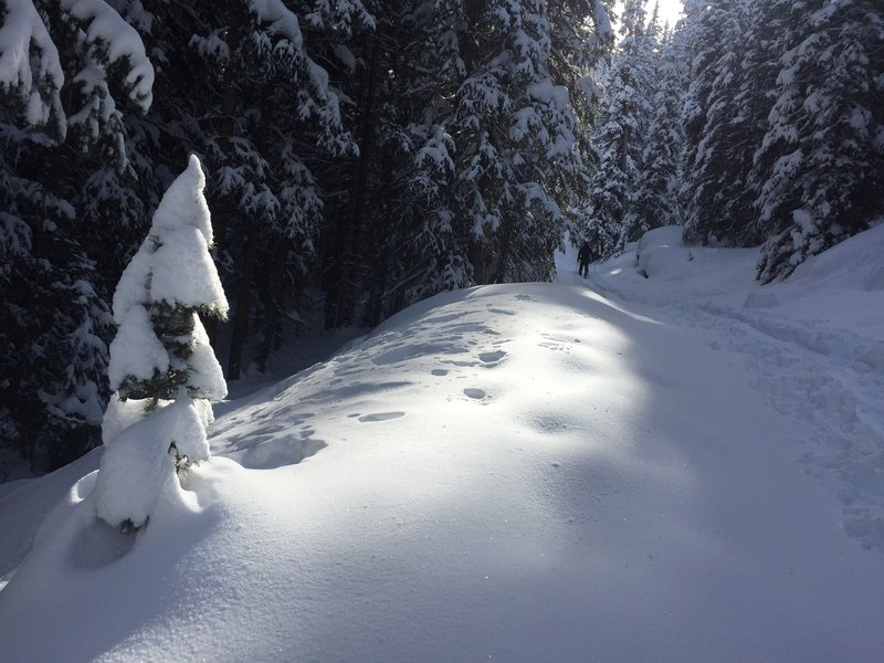 The skin trail up Mayflower Gulch is moderately steep.