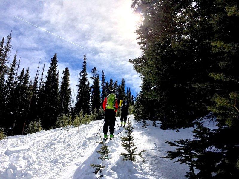 Ascending Juniper. Photo by Ryan Case.