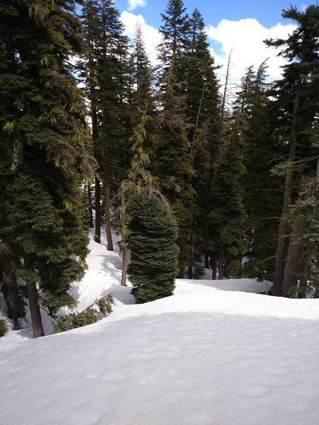 Explore amazing tree lines along the South Ridge of Brokeoff Mountain.
