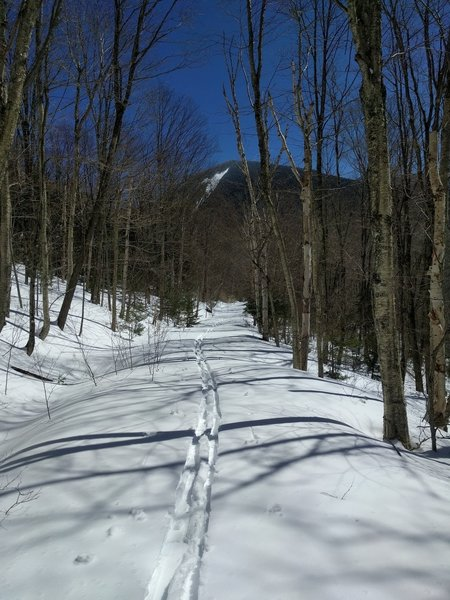 Skiing back down toward North Tripyramid, enjoy the pleasant wooded corrador.