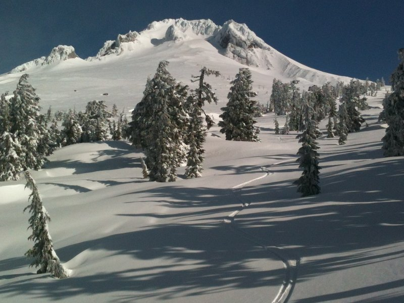 Skiing the Trees in Little Zig, Timberline, OR.
