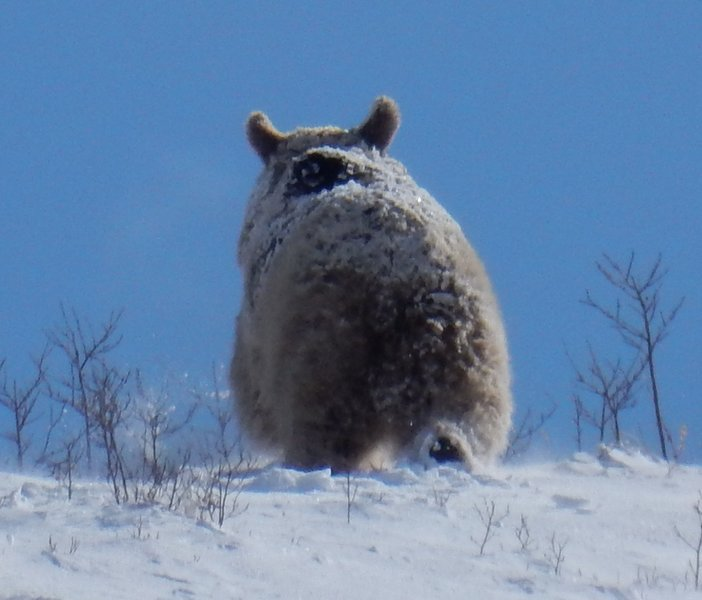 A bear retreats on Bujakan Mountain.