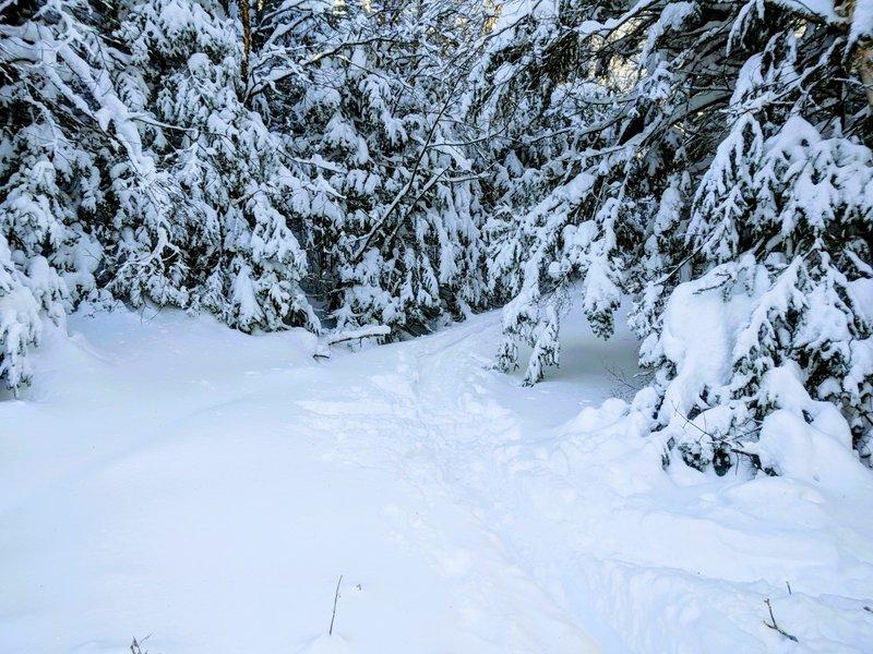 One of the switchbacks on the Al Merrill Ski Trail.