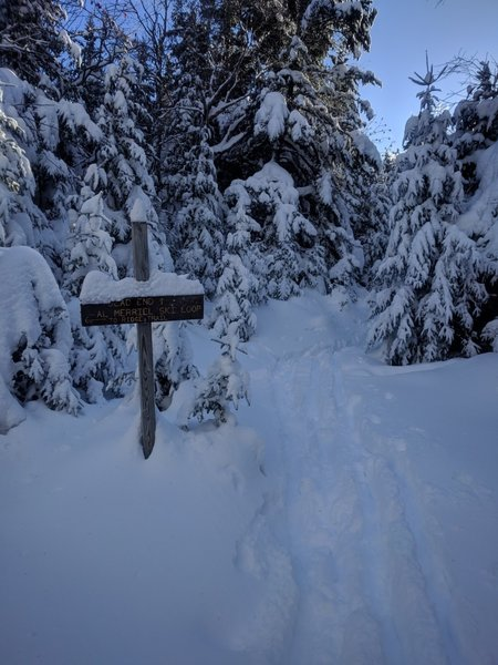A side trail to an old radio tower. Turn left to stay on the Al Merrill Ski Trail.