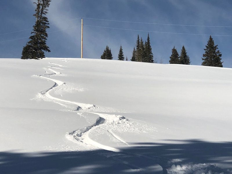 the field is white and ready to harvest, mellow easy slope
