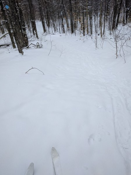 Beaver Loop is a gentle XC trail through the woods.