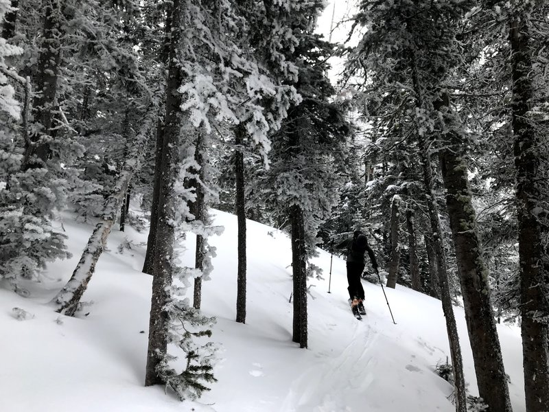 Heading up through a protected stretch of rime and windblown snow-covered trees.