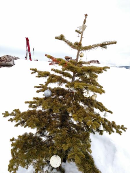 The summit tree.