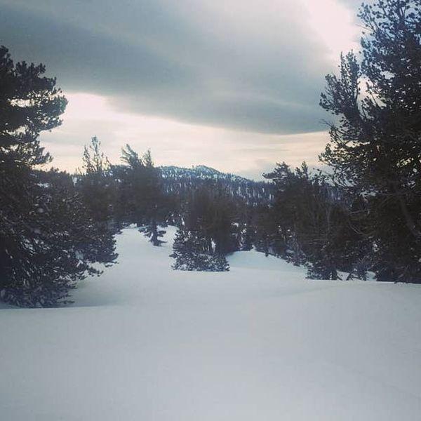 Pristine pow on the way up Chikadee Ridge.