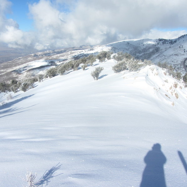 Great skiing from the top of Flap Doodle.  Note the Junipers.  This photo is facing north.