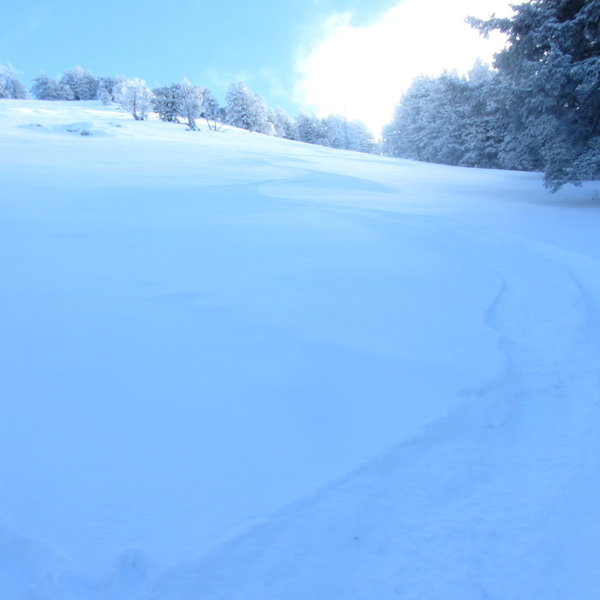 My ski tracks down Black's Peak Apron...sloppy turns, I know.  This is nearing the base of the run and looking back up it.