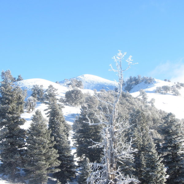 Shortly after gaining the start of Bountiful Ridge, this is looking North-East along it.  The center peak (part of the ridge) is Rectangle Peak.