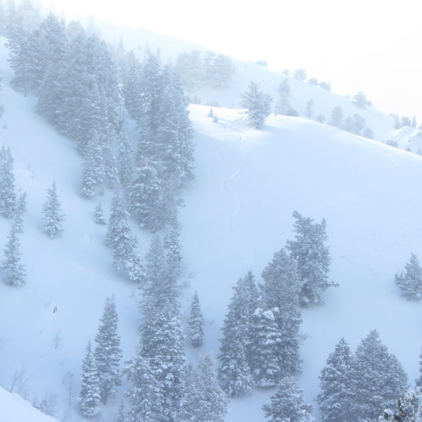These are my ski tracks dropping off the NE side of Crescent ridge mid-way down.  Glad it didn't slide on me.