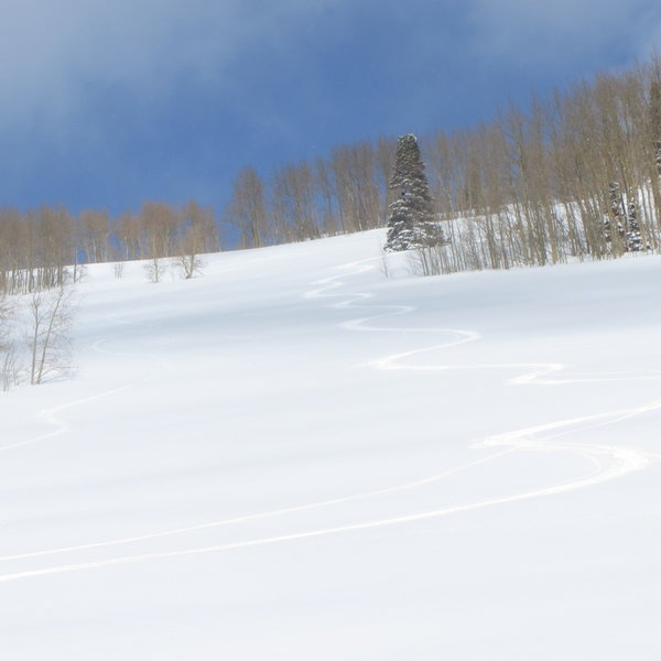 Here are my tracks down Powder Pansy.